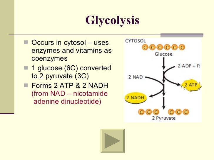 biochemical processes examples