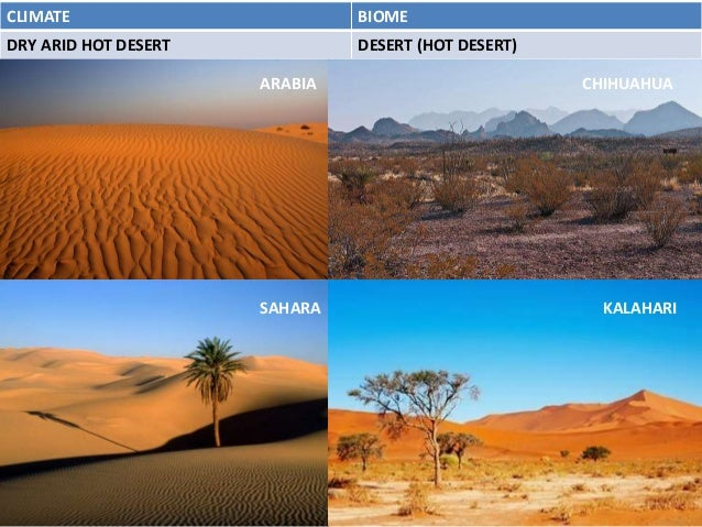 essays on desert biomes Waris dirie ['desert flower' and 'desert dawn'] her life-story the desert waris dirie (waris: a somali name that means desert flower) was born in the middle of the desert in somalia she was born into a nomad family of a tribe called darood, tha t was considered as wealthy.