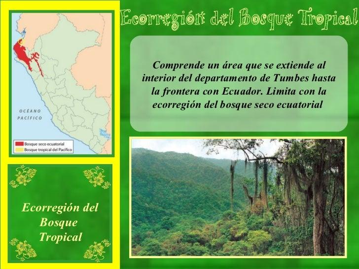 Comprende un área que se extiende al interior del departamento de Tumbes hasta la frontera con Ecuador. Limita con la ecor...