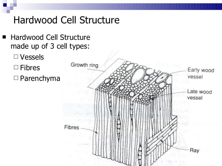 3  Cell Structure