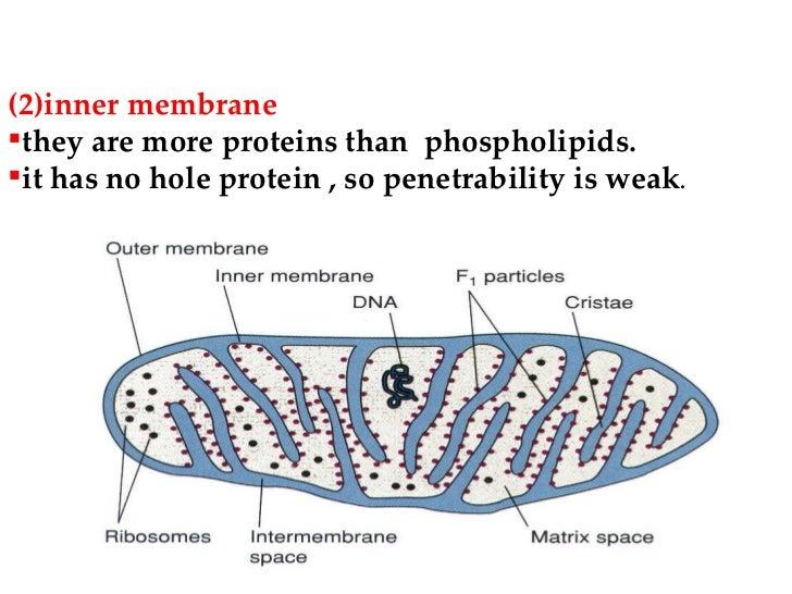 shop biomechanics mechanical properties