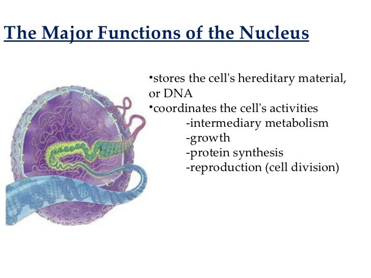 cellular basis of life I doubt whether carbon-based life can exist in such an environment, however,   living organisms are constructed largely around a backbone of carbon atoms.