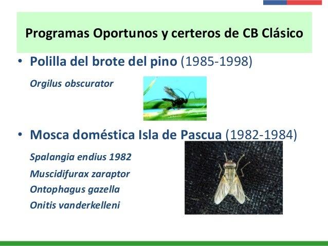 Programas Oportunos y certeros de CB Clásico • Polilla del brote del pino (1985-1998) Orgilus obscurator • Mosca doméstica...