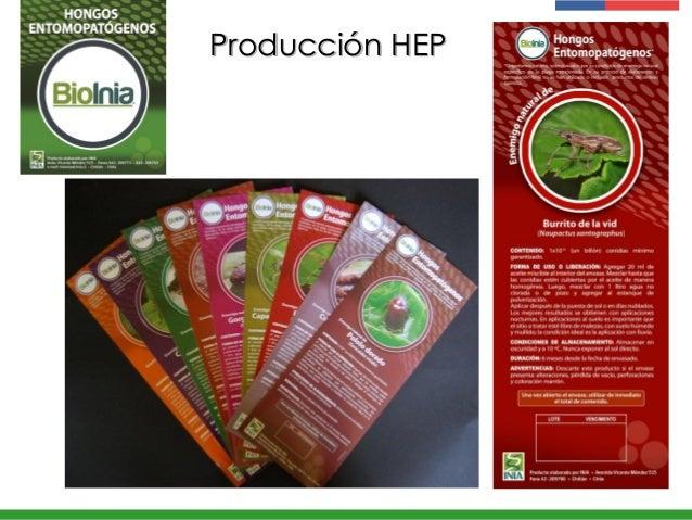 Producción HEP