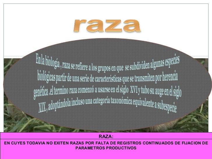 RAZA: Grupo de animales de la misma especie, con características morfológicas y productivas  SEMEJANTES  al ser explotadas...