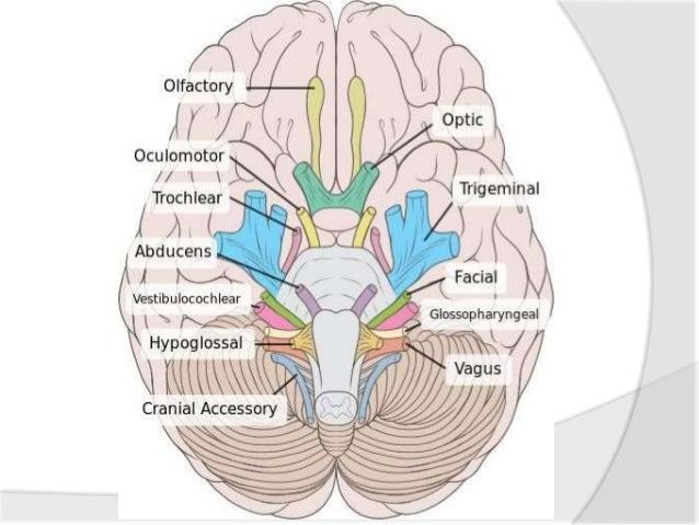 Part 3 cranial nerve examination Slide 2