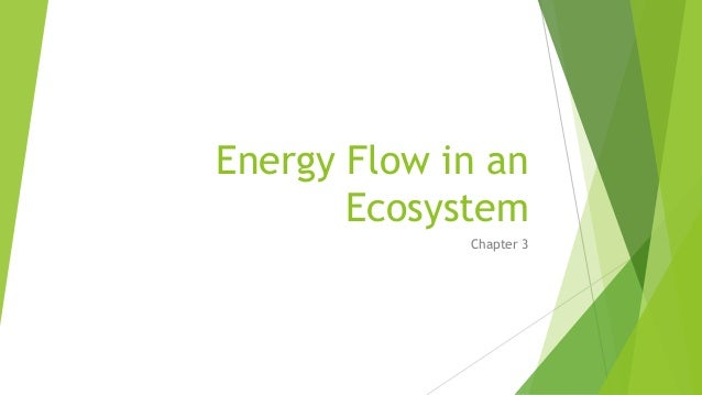 Energy Flow in an Ecosystem Chapter 3