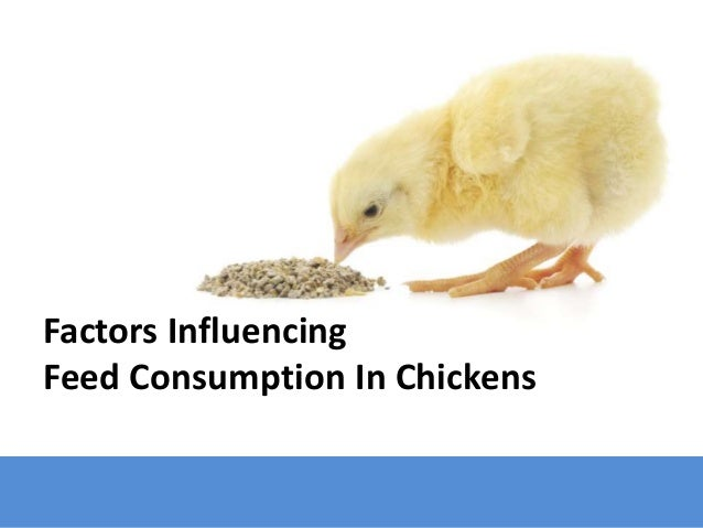 Factors Affecting Feed Consumption In Chicken