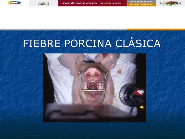 FIEBRE PORCINA CLÁSICA