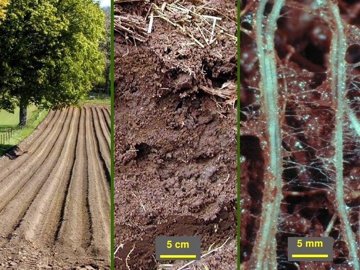 Presentation of jim harris professor at cranfield for Natural resources soil uses