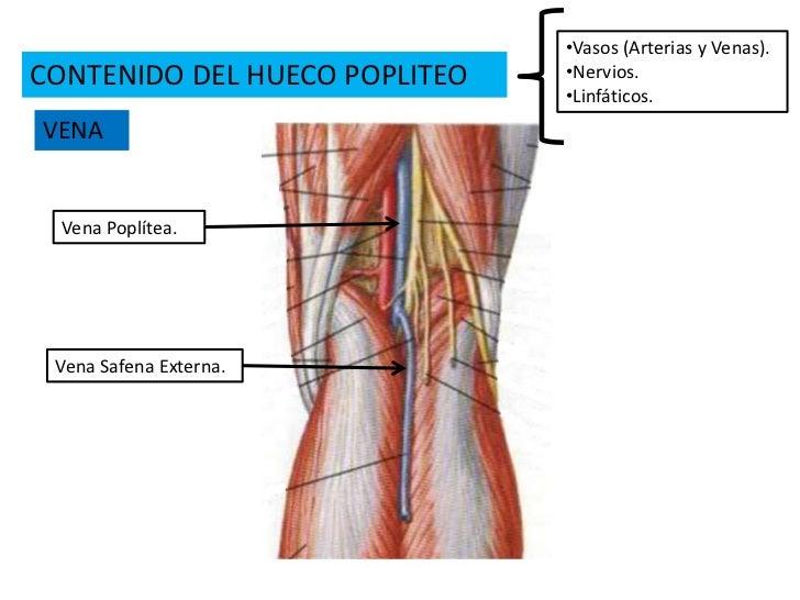 Contemporáneo Anatomía Vena Poplítea Ornamento - Anatomía de Las ...