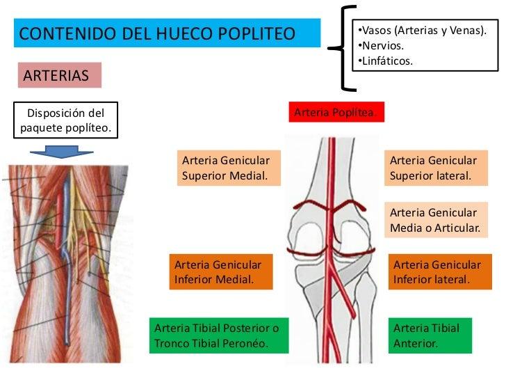 3. hueco popliteo y pierna