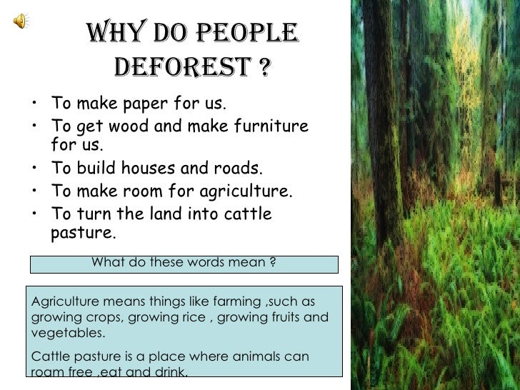 3 J Sabrina Soo Deforestation