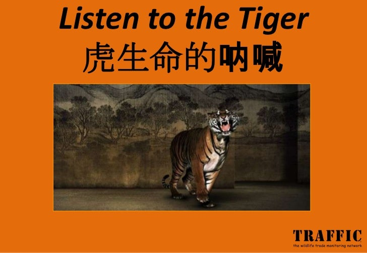 Listen to the Tiger  虎生命的呐喊