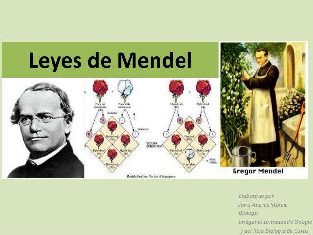 Leyes de Mendel                  Elaborado por                  Jairo Andrés Murcia                  Biólogo              ...