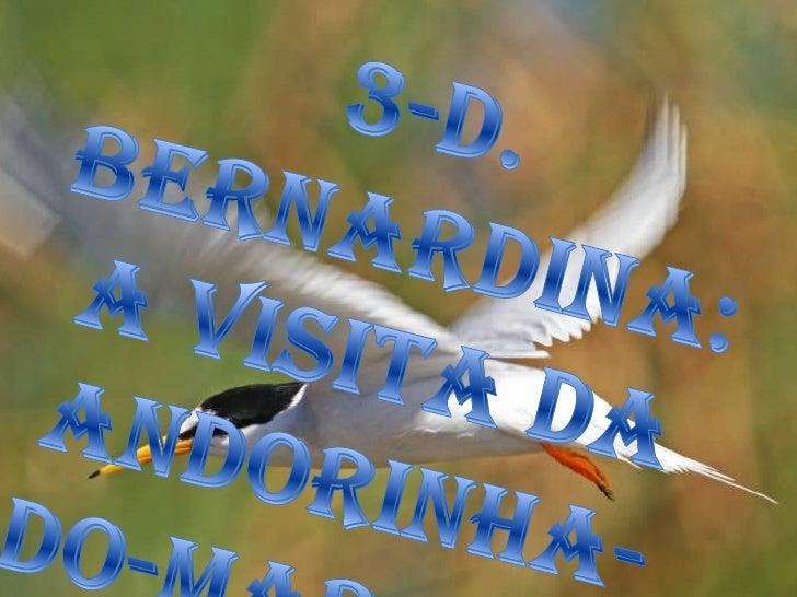 3-D. Bernardina: A visita da Andorinha-do-Mar-Anã<br />