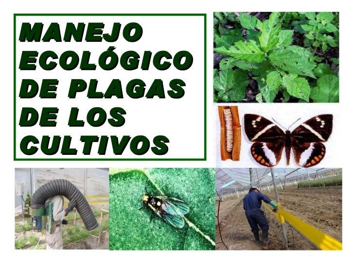 MANEJO ECOLÓGICO  DE PLAGAS DE LOS  CULTIVOS