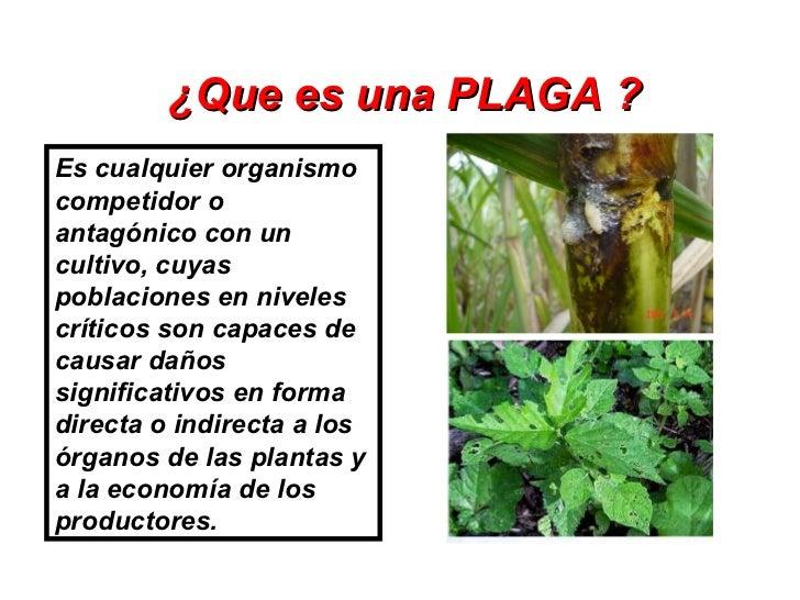 3. Manejo Ecologico De Plagas Slide 2