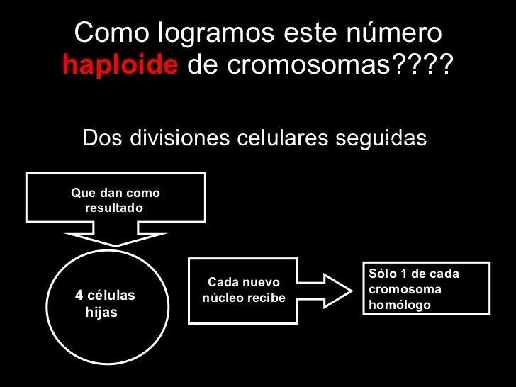 Como logramos este número  haploide  de cromosomas???? <ul><li>Dos divisiones celulares seguidas  </li></ul>4 células hija...