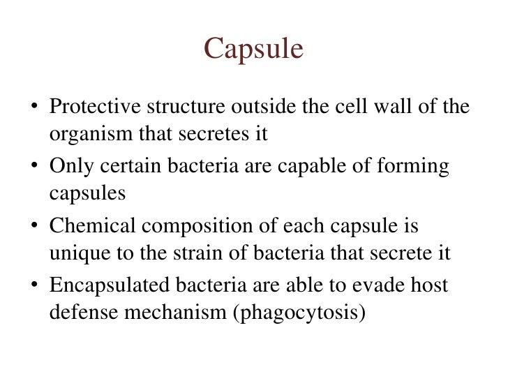 3 morphology & cell biology of bacteria