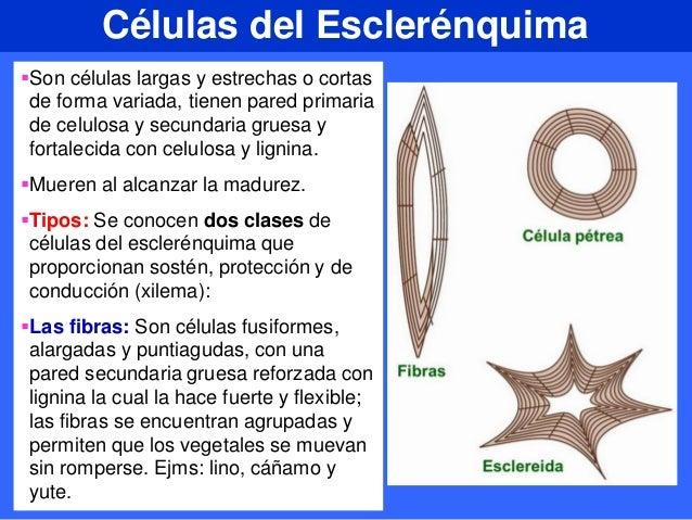 Introduccion A La Estructura De Las Plantas