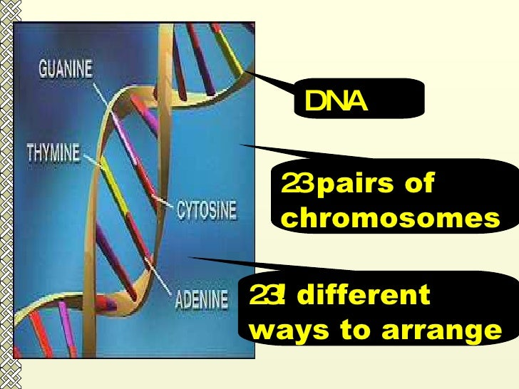 DNA 23  pairs of chromosomes 23 ! different ways to arrange