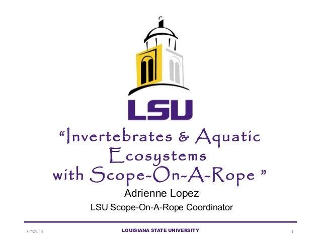"07/29/14 LOUISIANA STATE UNIVERSITY 1 ""Invertebrates & Aquatic Ecosystems with Scope-On-A-Rope "" Adrienne Lopez LSU Scope-..."