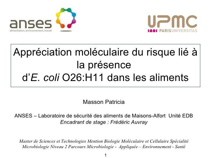 Appréciation moléculaire du risque lié à la présence  d' E. coli  O26:H11 dans les aliments Master de Sciences et Technolo...