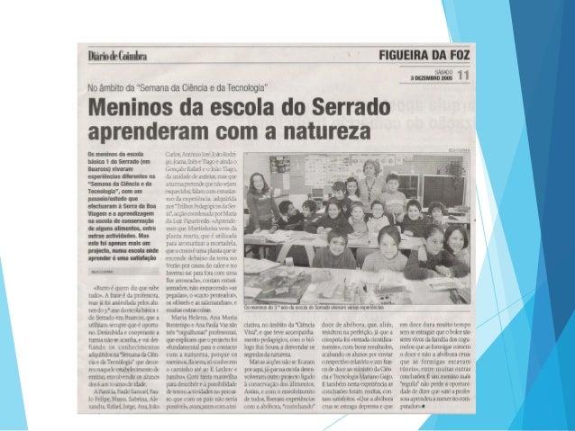 portuguesa caiu na net diario coimbra classificados
