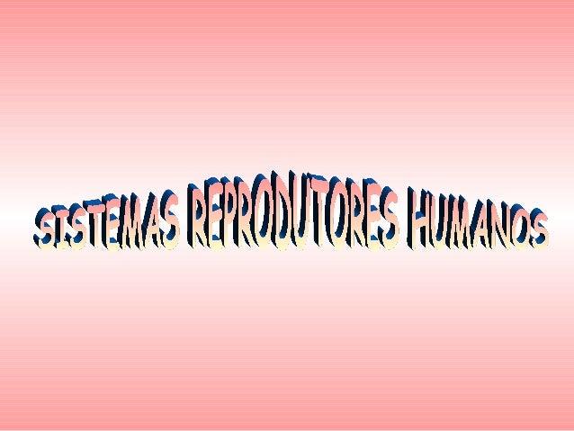 Sistema Reprodutor FemininoO sistema reprodutor feminino localiza-se na parte  inferior da cavidade abdominal e é constitu...