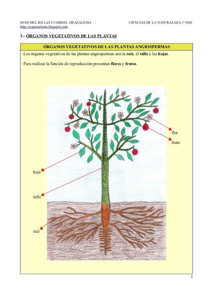 3 rganos vegetativos de las plantas for Funcion de las plantas ornamentales