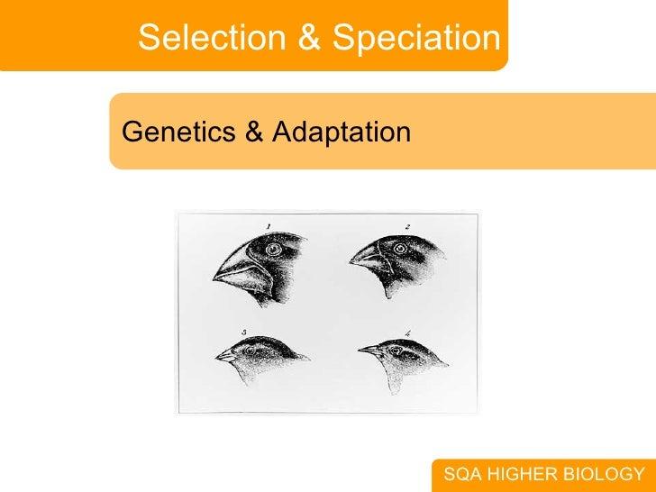 Selection & Speciation Genetics & Adaptation SQA HIGHER BIOLOGY