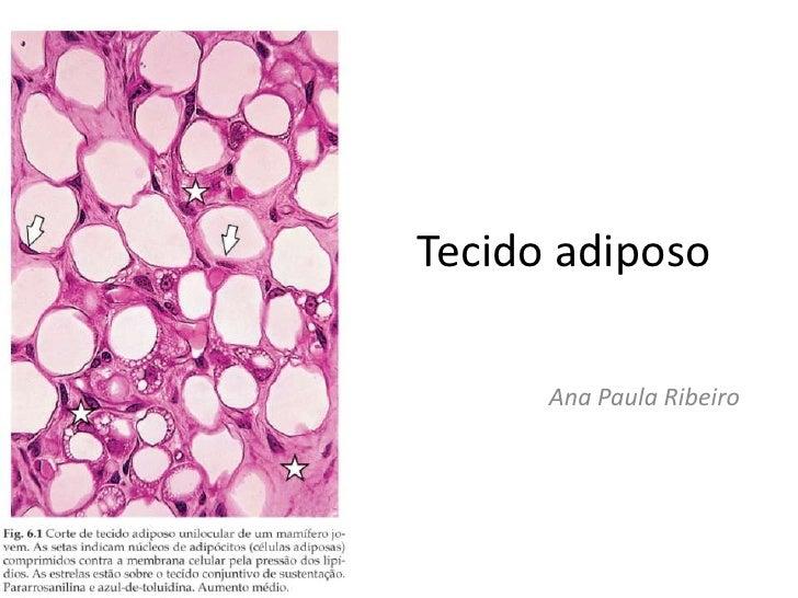 Tecido adiposo<br />Ana Paula Ribeiro<br />