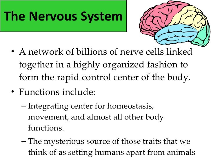 3. the nervous system