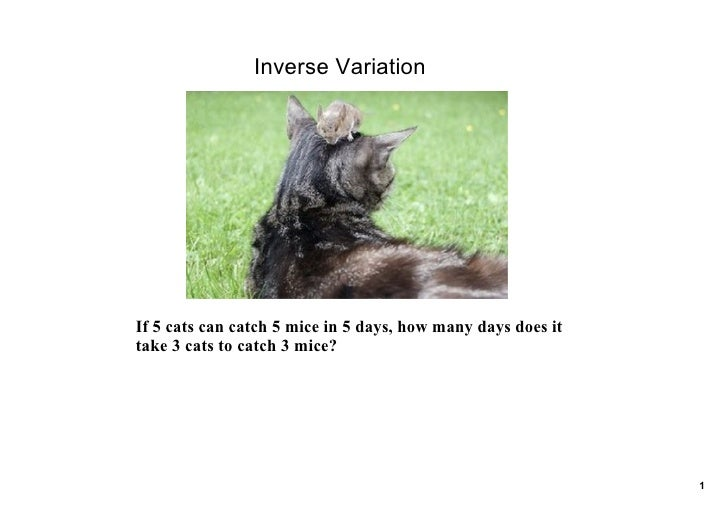 Inverse Variation     If 5 cats can catch 5 mice in 5 days, how many days does it  take 3 cats to catch 3 mice?           ...