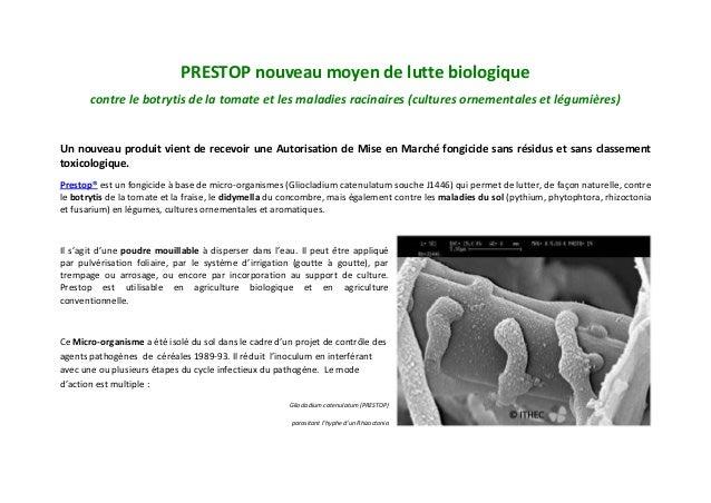 PRESTOP nouveau moyen de lutte biologiquecontre le botrytis de la tomate et les maladies racinaires (cultures ornementales...