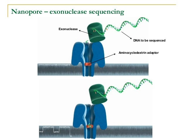 New Generation Sequencing Technologies: an overview