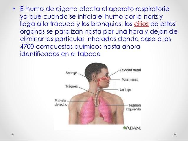 Da os al sistema respiratorio - Como eliminar el humo del tabaco en una habitacion ...