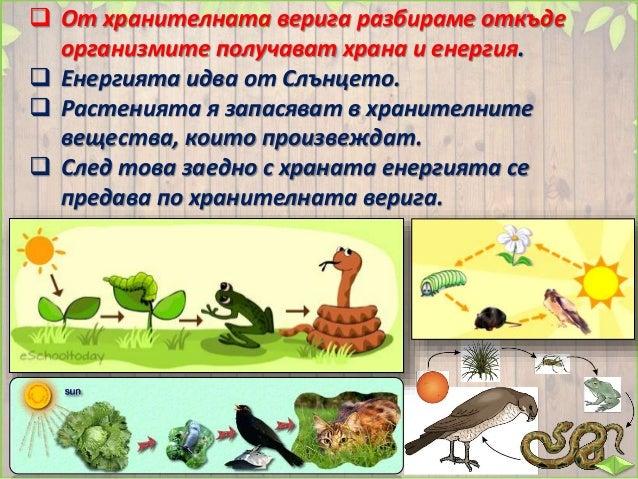  Растението е производител. /растение/  То е храна за първия потребител, който е растителноядно животно. храна за /расти...