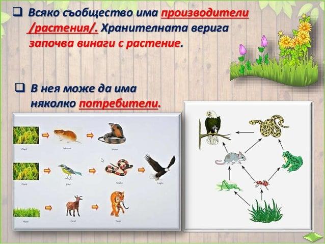  Стрелките върху рисунката ще ви помогнат да проследите различни хранителни вериги в гората.  Едно растение или животно ...
