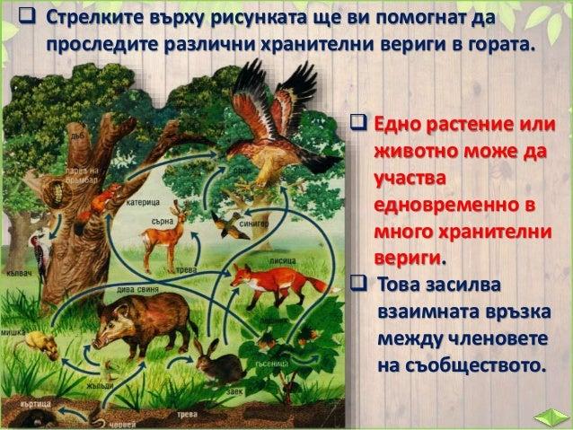  Какво би станало, ако хората разпръснат отрова за мишки в полето?  Какво ще се случи с лисиците и птиците, които се хра...