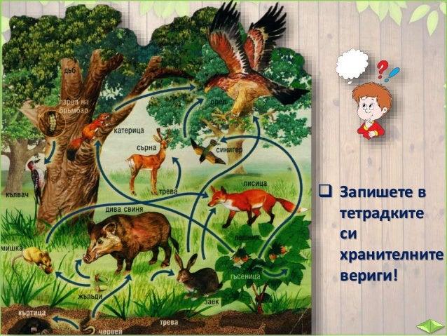 Всички животни са важни за едно съобщество. Затова хората трябва да опазват разнообразието от растения и животни в дивата ...