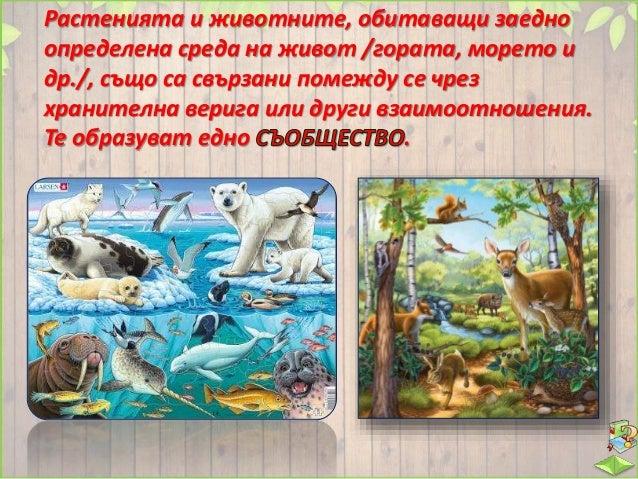  Гората е среда на живот за много дървета, храсти, треви, насекоми, птици, бозайници и други организми.  Някои гори заем...