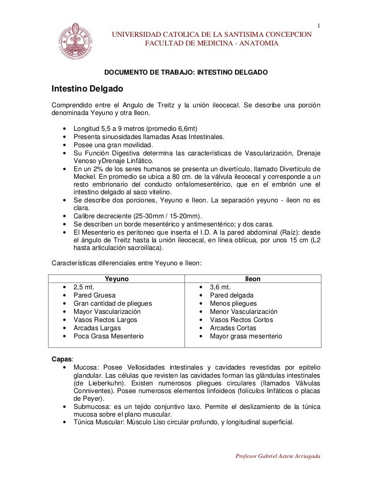 30. documento intestino delgado
