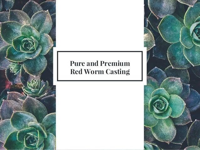 Pure And Premium Worm Casting Sunman Export Slide 2