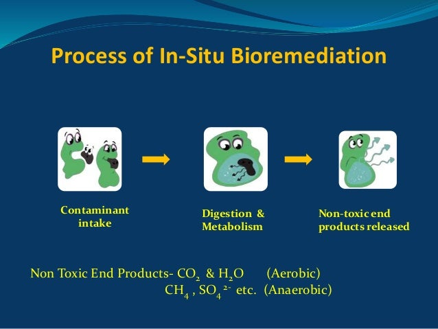 bioremediation of explosive contaminated soil Ecotoxicological assessment of anaerobic bioremediation of sludge contaminated by the explosive 2,4,6-trinitrotoluene (tnt)  - remediate sludge and soil .