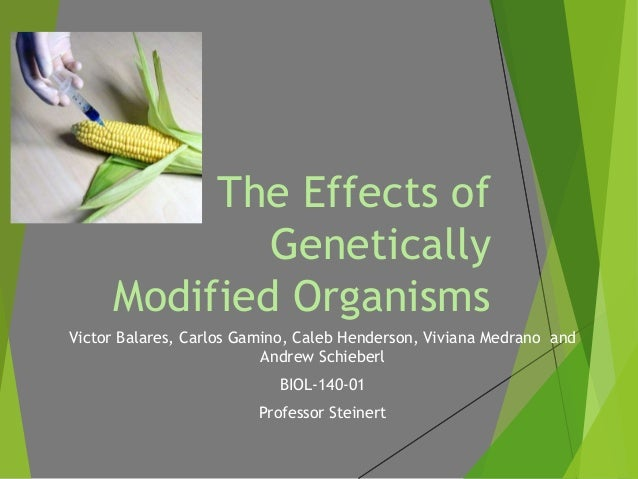 the positive effect of genetically modified organisms Gmos are nothing to fear around the safety of genetically modified organisms credible scientific study showing gmos to have harmful effects on.
