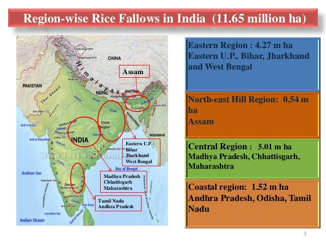 Strengthening Food Security and Nutrition Governance: Integration of Pulses into Rice Fallows in India Slide 3