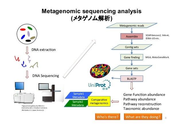 メタゲノム 解析