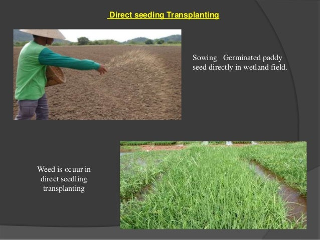 manual seed sowing machine ppt